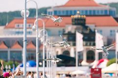 Seagulls flyingon the pier in Sopot, Poland. Stock Photo