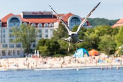 Seagulls flyingon the pier in Sopot, Poland. Royalty Free Stock Photo