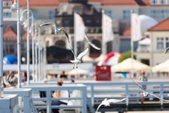 Seagulls flyingon the pier in Sopot, Poland. Stock Photos