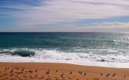 Seagulls fodrar in Royaltyfri Foto