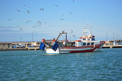 Seagulls Follow A Fishing Boat - Birds Stock Images