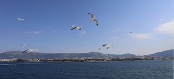 Seagulls following a ferry leaving Split, Croatia royalty free stock photography