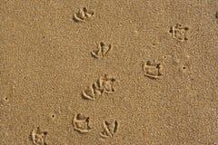 Seagulls footprints. On the sand Stock Photos