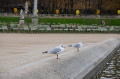 Seagulls at the fountain in the Luxembourg garden Royalty Free Stock Image