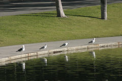 Seagulls four royalty free stock photography