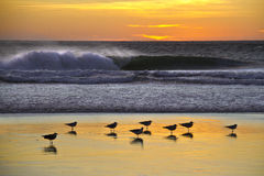 Seagulls in front of crashing waves Stock Images