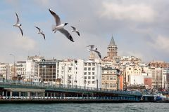 Seagulls in front of Galata Bridge Royalty Free Stock Photography