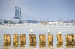Seagulls in Gdynia, The Baltic Sea Stock Photos