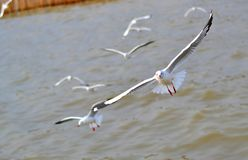 The seagulls glided on the wind Stock Photo