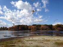 Seagulls gliding on the wind Royalty Free Stock Images