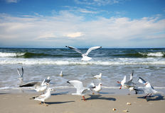 Seagulls. Group of Seagulls on the beach stock images
