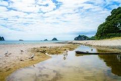Seagulls at hahei beach, coromandel peninsula, new zealand 1 Royalty Free Stock Photos