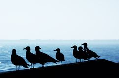 Seagulls in the harbor Stock Image