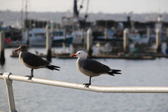 Seagulls in harbor Stock Image