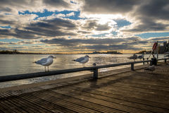 Seagulls on Harbourfront - Toronto, Ontario, Canada. Seagulls on Harbourfront in Toronto, Ontario, Canada Stock Images