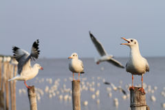 Seagulls holding on pillars Stock Images