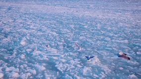 Seagulls hover in the sky over the frozen ocean at sunset. Slow motion.Droneshot stock footage