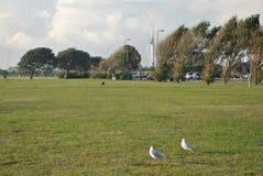 Seagulls i det Portsmouth och spinnakertornet Arkivfoto