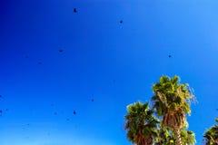 Seagulls i drzewka palmowe obrazy royalty free