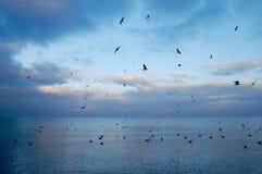 Seagulls i Gdansk efter solnedgång Royaltyfri Bild