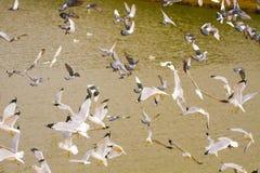 Seagulls i gołębi Latać Obrazy Stock