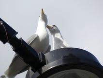 Seagulls i låg vinkel för stad sköt blå himmel Royaltyfria Foton