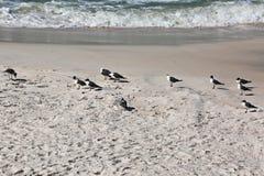Seagulls i ocean fala zdjęcia royalty free