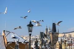 Seagulls i Prague Royaltyfri Fotografi