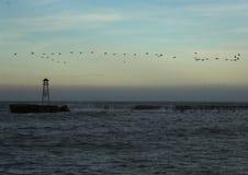 Seagulls i rozbija fala Obraz Stock