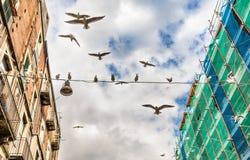Seagulls i Sicilien arkivbilder