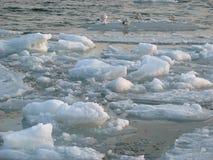 Seagulls on ice Stock Image