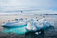 Free Seagulls In Antarctica Royalty Free Stock Image - 19305076