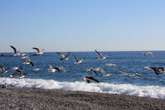 Free Seagulls In Flight Royalty Free Stock Photos - 7540758
