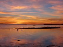 Seagulls in iseland and in burning sky in Talin in Estonia Stock Photos
