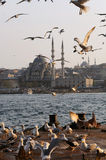 Seagulls in Istanbul Stock Image