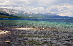 Seagulls on Khovsgol Lake. Seagulls rests on the shallow waters of Khovsgol Lake in northern Mongolia Royalty Free Stock Photos