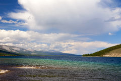 Seagulls on Khovsgol Lake. Seagulls rests on the shallow waters of Khovsgol Lake in northern Mongolia Stock Photo