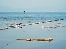 Seagulls at lake in italy. Seagulls at lake lago di garda in italy royalty free stock image