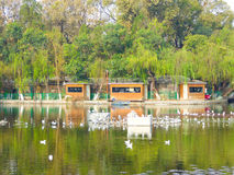 Seagulls on the lake Royalty Free Stock Image