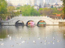 Seagulls on the lake near bridge Stock Photography