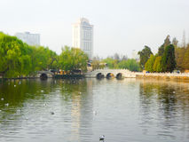 Seagulls on the lake near bridge Stock Image