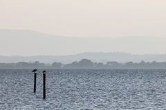 Seagulls on a lake. Two seagulls on poles on a lake, with distant hills in the background, and very soft colors, mostly white and light blue Royalty Free Stock Photos