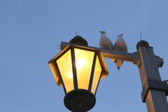 Seagulls on lamp post Stock Image