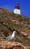 Seagulls in land in the island Berlenga, Portugal. Royalty Free Stock Images