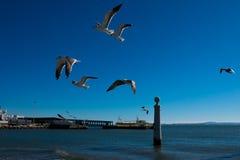 Seagulls lata czekanie karmić Tagus rzeka Obrazy Stock