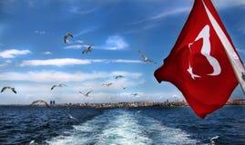 Seagulls lata nad morzem, Istanbuł, Turcja obraz royalty free