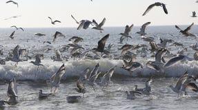 Seagulls lata nad oceanem Obrazy Royalty Free