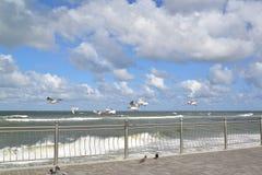 Seagulls latają nad morzem bałtyckim Obrazy Royalty Free