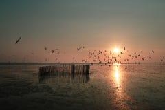 Seagulls latają przy Bangpu Rekreacyjnym centrum podczas gdy zmierzch Zdjęcie Stock
