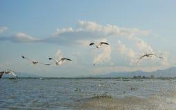 Seagulls latają wpólnie na niebieskim niebie Obrazy Royalty Free